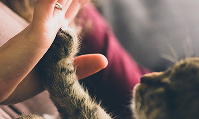 Kitten touching a hand