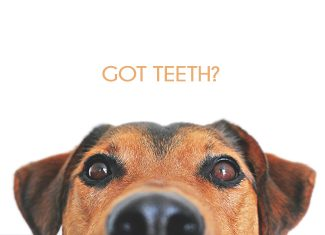 tooth teeth cat dog