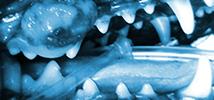 Explore Malignant Oral Tumor