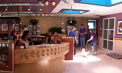 Lobby area of Veterinary Dental Center in Aurora Illinois