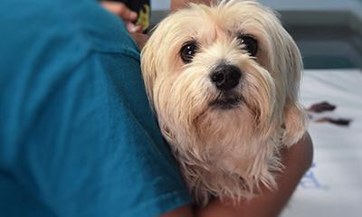 dog puppy veterinarian doctor