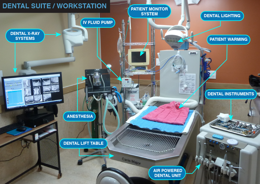Dental Suite & Workstation